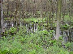 Charlesburg Swamp