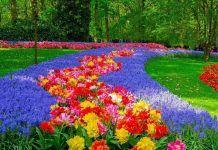 Free Image on Pixabay - Netherlands, Holland, Keukenhof Growing Flowers, Cut Flowers, Small Space Gardening, Gardening Tips, Sleeping Beauty Party, Garden Cloche, Spring Bulbs, Spring Garden, Growing Vegetables