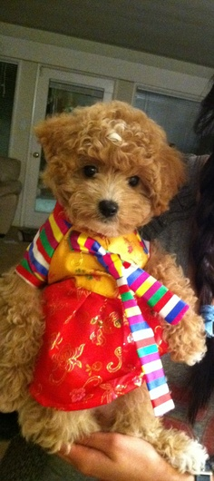 I don't usually like curly furred dogs, but this one is just way too cute!
