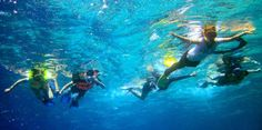 I tell you that there are water sports Snorkelling in Tanjung Benoa Beach. Scuba Diving Thailand, Koh Phangan, Snorkelling, Koh Tao, Travel Activities, Beach Resorts, Water Sports, Underwater, Bali