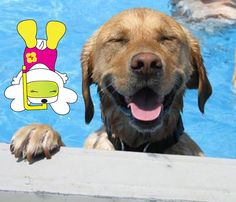 A new week brings new adventure. Time to jump in and get your paws wet! #hanaohana #hanaohanaworld #doggiebloggie #fun #adventure #snorkle #paws #pooch