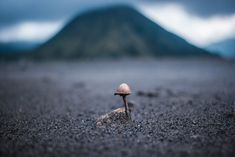 tilt-shift photography of brown mushroom On the way to Mount Bromo… Freedom Images, Freedom Pictures, Tilt Shift Photography, Nature Photography, Travel Photography, Backpacking Pictures, Volcano Pictures, Brown Mushroom, Flower Silhouette