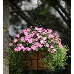 Container Gardening - Combination #63