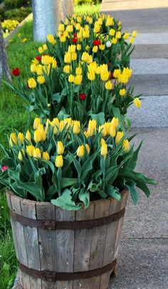 Organic Gardening Magazine Back Issues Tulips Garden, Garden Bulbs, Garden Pots, Planting Flowers, Outdoor Landscaping, Outdoor Gardens, Front Garden Landscape, Organic Gardening Magazine, Home Vegetable Garden
