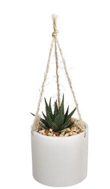 White And Gold Decor, White Gold, Hanging Baskets, Plant Hanger, White Ceramics, Roots, Succulents, Planter Pots, Indoor