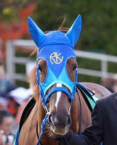 Beautiful horse Admire Septer アドマイヤセプター 京阪杯 2
