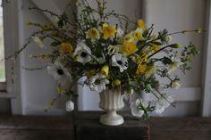 forsythia, spirea, flowering plum, anemones, narcissus, honeysuckle foliage, ivy berries