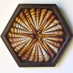 "A mixed media artwork, seashell collage, assemblage, wall sculpture, a unique variation of the ""Sailor's Valentine"" combines wood and shells"