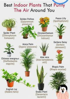 ✅ Best plants to clear your kitchen gas & home polluted air. 🌱 🌿🍃