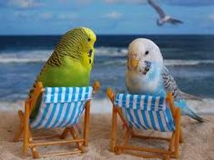 Budgies at the Beach.