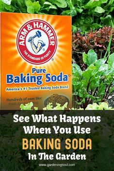 She Spilled Baking Soda around the Bed and after 30 Minutes Absolutely everyone Was Speechless: While you See Why, You are going to Do the identical! Veg Garden, Garden Pests, Plant Pests, Soda Brands, Baking Soda Uses, Container Gardening Vegetables, What Happens When You, Gardening Tips, Hydroponic Gardening