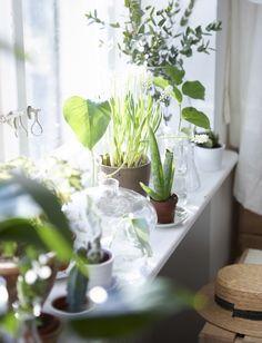 Ein Arrangement aus Pflanzen auf der Fensterbank bringt Ruhe ins Schlafzimmer.