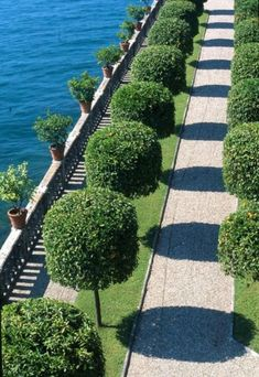 Traditional Italian gardens rely on hedges and topiaries of all sorts to impart rigidity and express symmetry. Despite this grand example, this approach can easily be adapted to the smallest lot. Formal Gardens, Outdoor Gardens, Modern Gardens, Japanese Gardens, Small Gardens, Landscape Architecture, Landscape Design, Topiary Garden, Topiary Trees