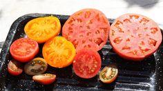 Forgyldte tomater
