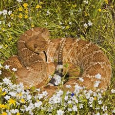 Barriers are the best protection against rattlesnakes.