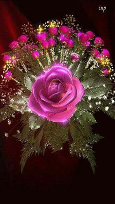 The perfect Pink Flowers Roses Animated GIF for your conversation. Discover and Share the best GIFs on Tenor.
