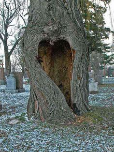 "Mother Natures Heart. I think this is so beautiful. Especially since its in a Cemetery. Back to ""Mother Earth."""