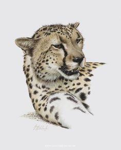 PORTRAITS OF THE BIG CATS 10