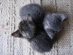 Google+  What A Cute Kitties!