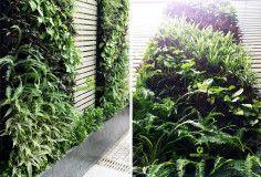 Thiết kế thi công vườn đứng đẹp. Tạo không gian trong lành ngay cả với bức tường nhà bạn http://greenmore.vn/thiet-ke-canh-quan-san-vuon-3/