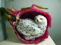 Fruit du dragon sculpté