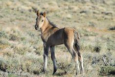 Galena's foal Nye