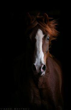 Chestnut horse | Bay horse