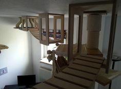 Cat climbing furniture. #cats #CatClimb