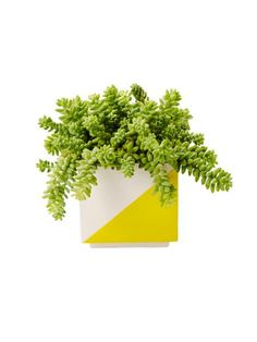 HGTV Magazine married popular houseplants with cutecontainers. Get inspired by these nine happy pairs.