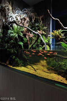 2014 AGA Aquascaping Contest - #351 #TropicalFishAquariumIdeas