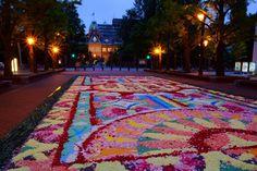 札幌フラワーカーペット(Sapporo Flower Carpet)