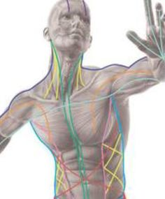 To truly understand fascia recoil, you must first understand the fascia system. Fascia is the soft tissue that holds us together and it has more nerve activity than muscle! Fascia permeates the entire body and literally connects to every structure, from head to toe, hand-to-hand, inside to out. An example of structural fascia is the membrane you see on the inside of chicken skin. The fascia runs in long strips throughout the human body as well. www.FasciaBlaster.com