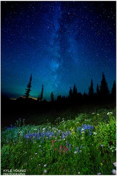 Milky Way, Mt. Rainier, flowers in full bloom - tree silhouettes and star gazing :) Romantic! Valentine's day