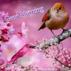 Birdy Good Morning Gif morning good morning good morning quotes good morning gifs good morning gif good morning images good morning quotes and sayings good morning animation good morning animated quotes Good Morning Gif Animation, Good Morning Animated Images, Good Morning Images Flowers, Animated Love Images, Good Morning Roses, Beautiful Good Night Images, Good Morning Happy Sunday, Good Morning World, Good Morning Picture