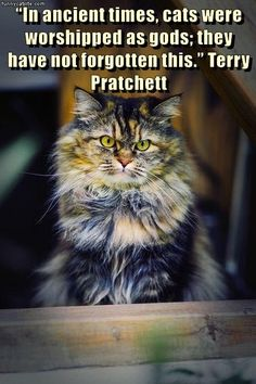 """""""In ancient times, cats were worshipped as gods; they have not forgotten this."""" Terry Pratchett"""
