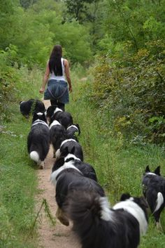 this woman must need a lot of management. I count 10 Border Collies herding her.