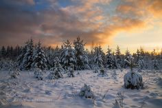Snow forest by EvgeniySmolskiy. Please Like http://fb.me/go4photos and Follow @go4fotos Thank You. :-)
