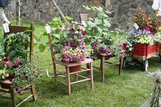 Thinking spring as winter is about to set in.  These chair planters would be a great winter project and Jeffrey's Antique Gallery is the place to find those chairs that need a little TLC!