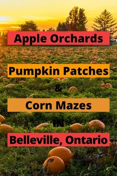 Fall is the perfect time of year for visiting pumpkin patches, apple orchards, and corn mazes. Whether you're looking to go apple picking or want to spend a day out with the kids, these are the orchards and pumpkin patches in the Belleville area you