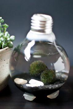 DIY Lightbulb Aquarium Tutorial
