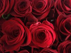 Luscious red roses perfect for Valentines Day!