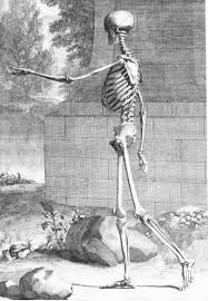 vesalius skeleton - Google Search