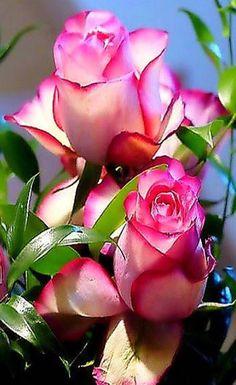 per la estimada ROSITA EPD 11/11/16 de Francesca i jordi.