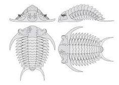 Resultado de imagen para trilobites