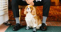 So we may love cats, ferrets, and cockatoos, but let's face it, dogs are the freakin' best. When it comes to man's best friend, we absolutely love weddings