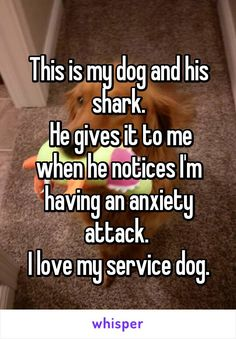 This is my dog and his shark.  He gives it to me when he notices I'm having an anxiety attack.  I love my service dog.