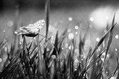 | butterfly |