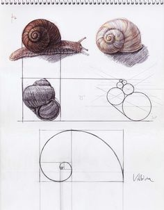 The Snail and the Golden Ratio - Ballpoint pen by VictoriaVerebelyi.deviantart.com