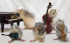 cute rats - Google Search