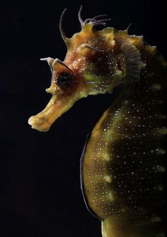 Image result for most beautiful seahorse